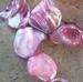 Schelpkraal rose